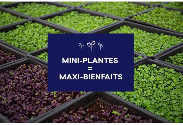 Mini-plantes = maxi-bienfaits
